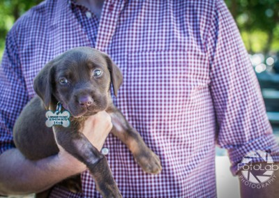 Labrador Friends of the South Adoption Day 6-14-16