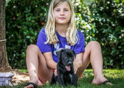 Labrador Friends of the South Adoption Day 6-14-162