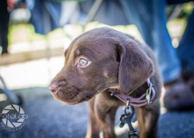 Labrador Friends of the South Adoption Day 6-14-43