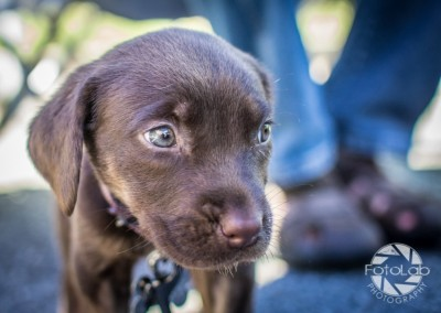 Labrador Friends of the South Adoption Day 6-14-45