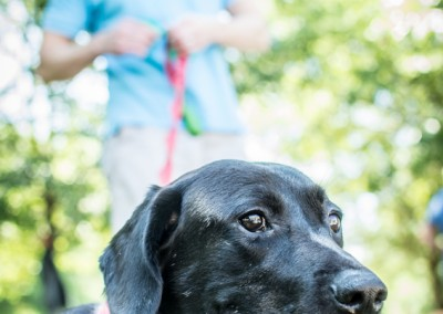 Labrador Friends of the South Adoption Day 6-14-58