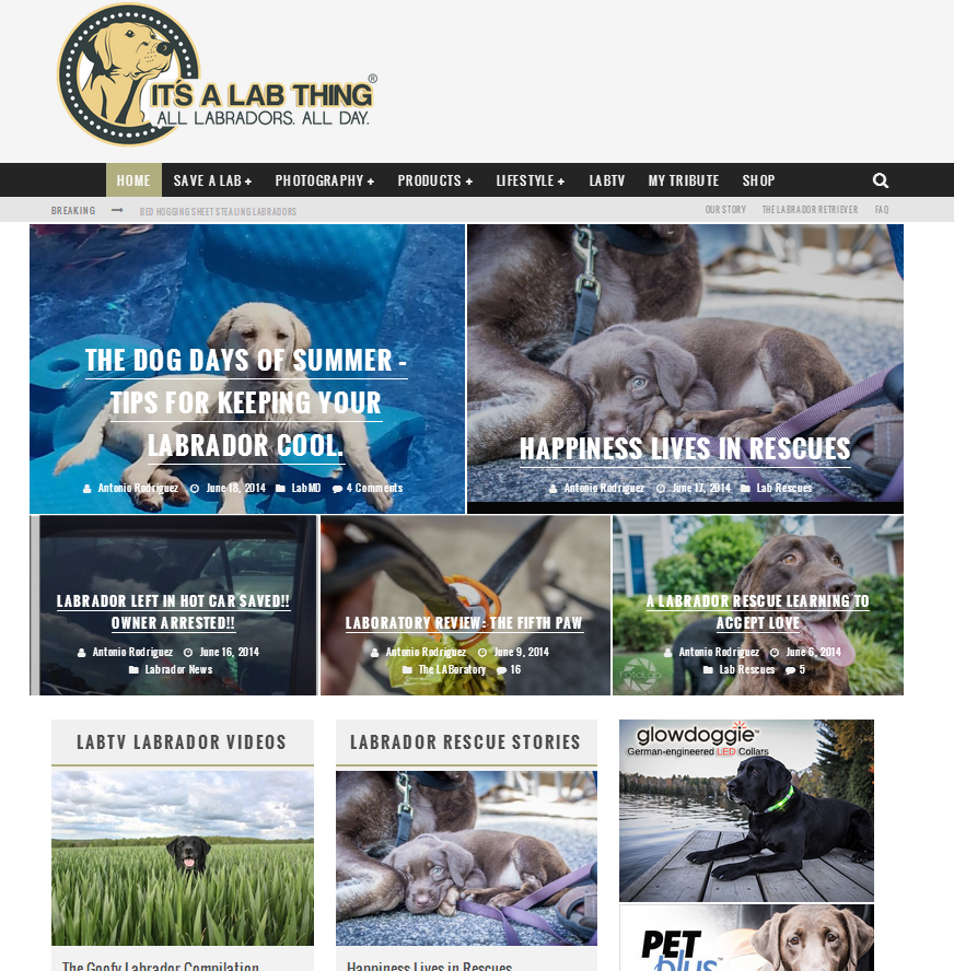 It's a Lab Thing Website Blog design